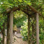 Bahçe Tasarım Mimarı (30)